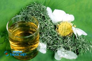Đậu quyển là một trong những vị thuốc quý thanh nhiệt giải thử trong đông y