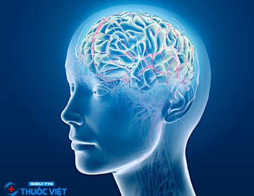 Viên uống bổ não tăng cường trí nhớ Nature Made Ginkgo Biloba 30mg
