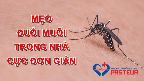 Phương pháp đuổi muỗi chống dịch sốt xuất huyết hiệu quả